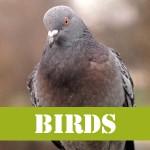 gotgophersBIRDS